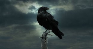 Game of Thrones photo 12
