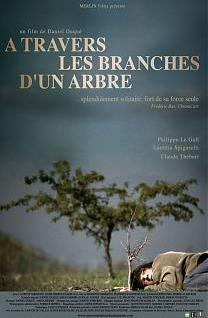 A travers les branches d'un arbre