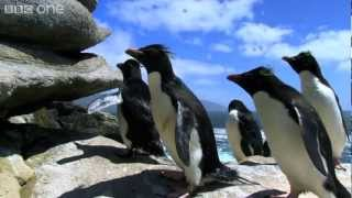 Penguins: Spy in the Huddle Extrait VO