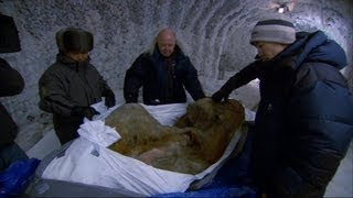 Woolly Mammoth: Secrets From The Ice Bande-annonce VO